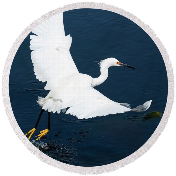 Snowy White Egret Round Beach Towel