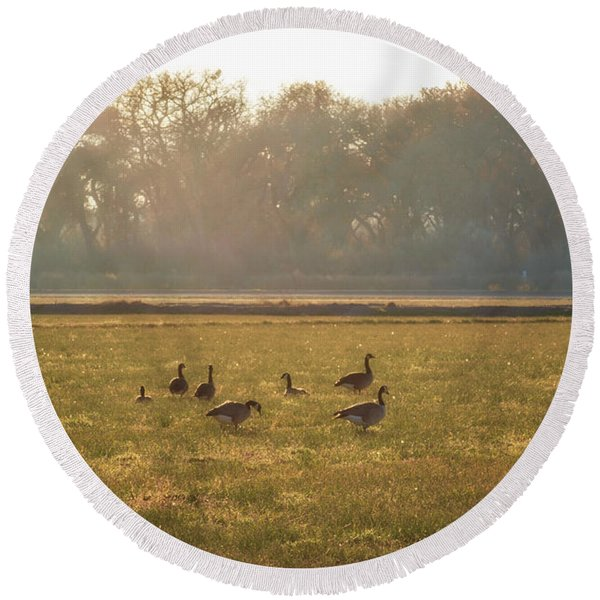 Round Beach Towel featuring the photograph A Golden Dream Of Geese by Mary Lee Dereske