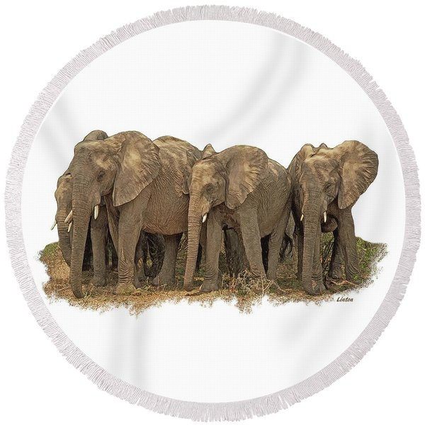 African Elephants 2 Round Beach Towel