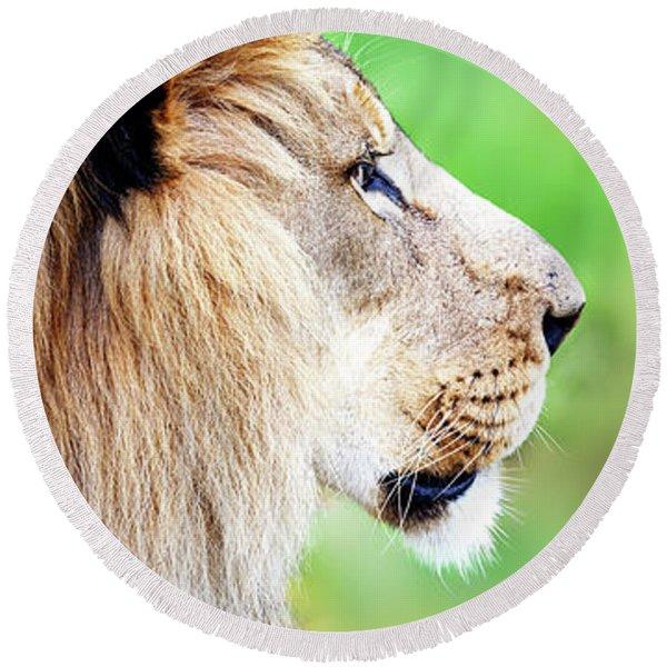 African Lion Face Closeup Web Banner Round Beach Towel