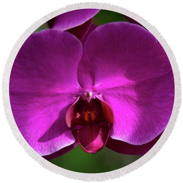 Allan Gardens Orchid Round Beach Towel