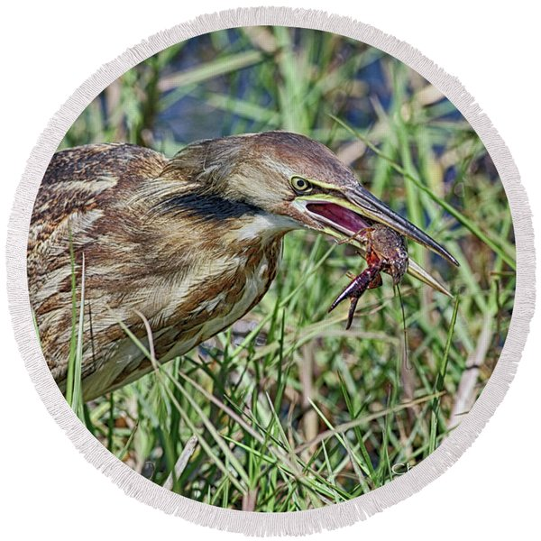 Am Bittern And Crayfish Round Beach Towel