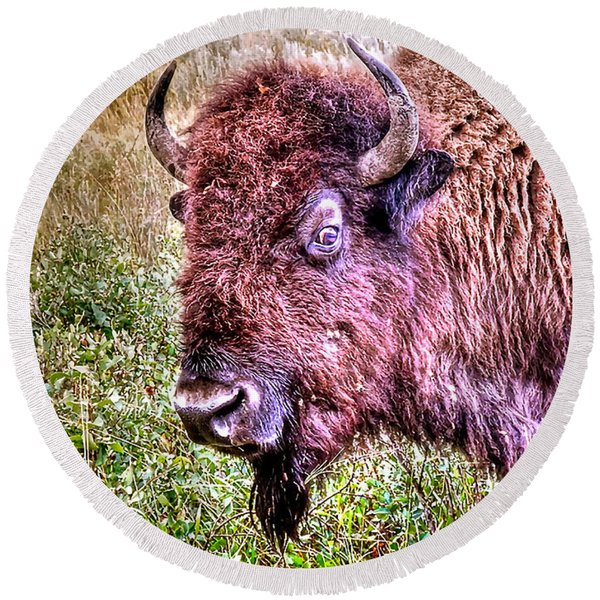 An Astonished Bison Round Beach Towel