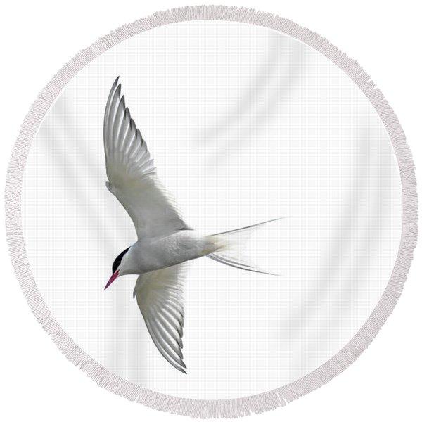 Arctic Tern Flying In Mist Round Beach Towel