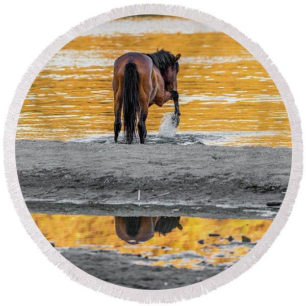 Arizona Wild Horse Playing In Water Round Beach Towel