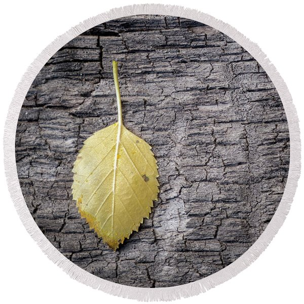 Round Beach Towel featuring the photograph Aspen Leaf On Bark by Mary Lee Dereske