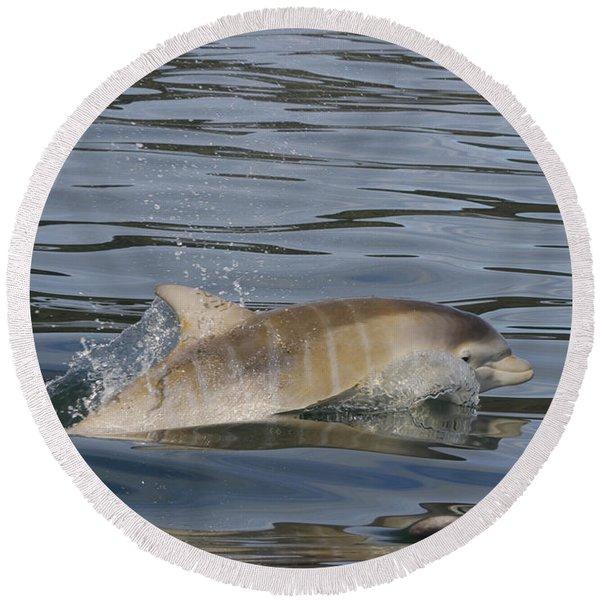 Baby Bottlenose Dolphin - Scotland  #35 Round Beach Towel