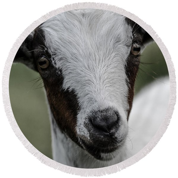 Baby Goat Round Beach Towel