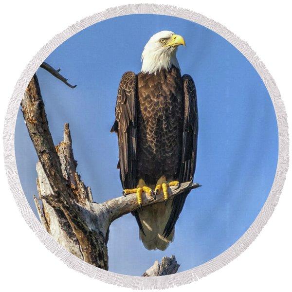 Bald Eagle 6366 Round Beach Towel