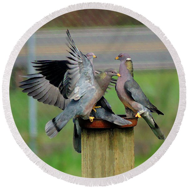 Band-tailed Pigeons #1 Round Beach Towel