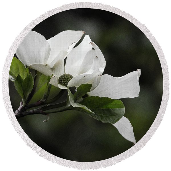 Beautiful Dogwood Round Beach Towel