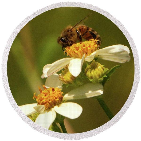Bee Among Daisies Round Beach Towel