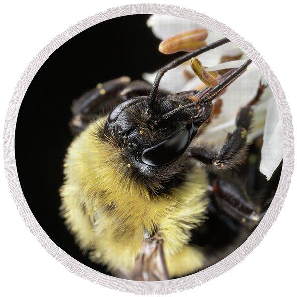 Bee Macro 1 Round Beach Towel