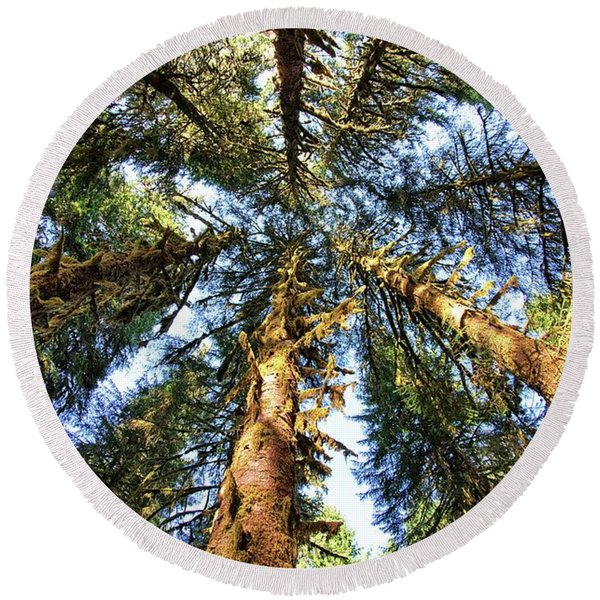 Big Trees In Olympic National Park Round Beach Towel