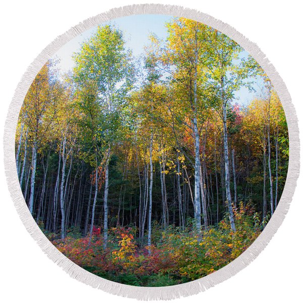 Birch Trees Turn To Gold Round Beach Towel
