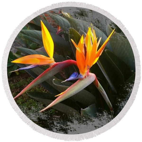 Birds Of Paradise Round Beach Towel