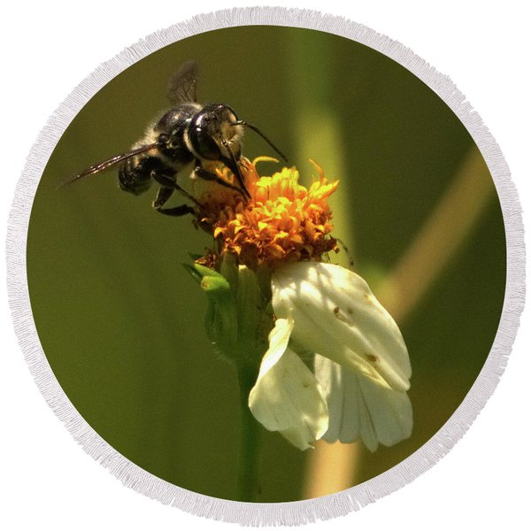 Black And Yellow Bee Pollinating Round Beach Towel