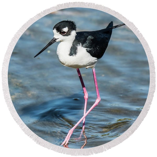 Black-necked Stilt Shows Legs Round Beach Towel