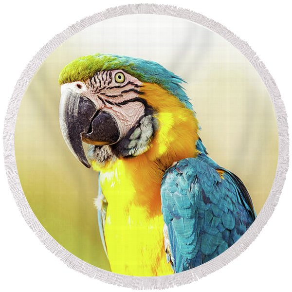Blue And Yellow Macaw With Copy Space Round Beach Towel