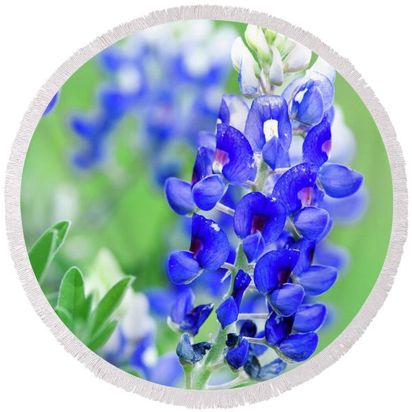 Bluebonnets 071616 Round Beach Towel