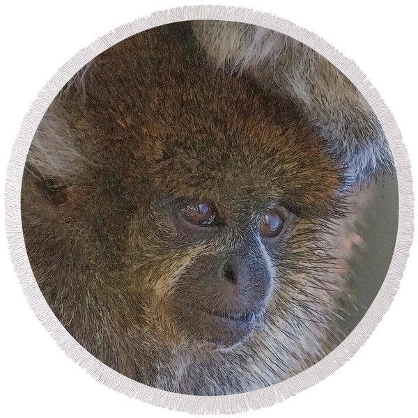 Bolivian Grey Titi Monkey Round Beach Towel