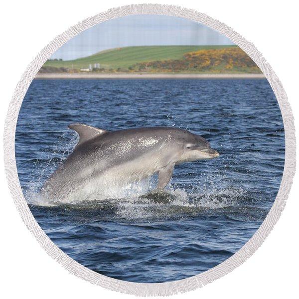 Bottlenose Dolphin - Scotland  #32 Round Beach Towel