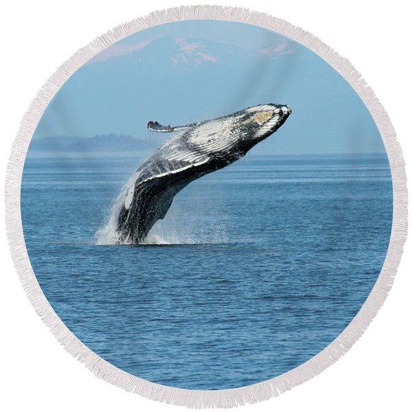 Breaching Humpback Whales Happy-3 Round Beach Towel