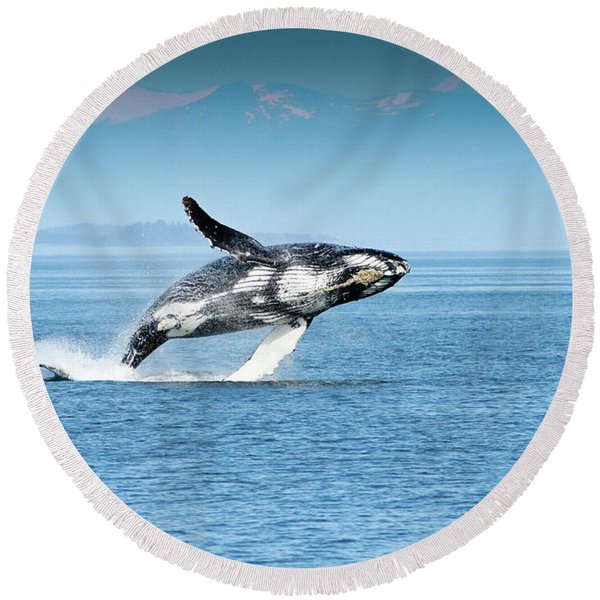 Breaching Humpback Whales Happy-4 Round Beach Towel