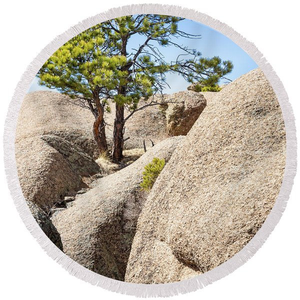 Round Beach Towel featuring the photograph Bristlecone In Granite 2 by Tim Newton