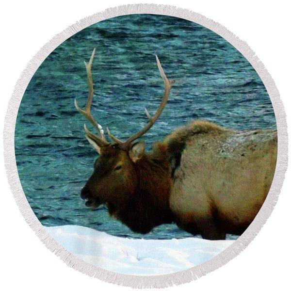 Bull Elk In Winter Round Beach Towel