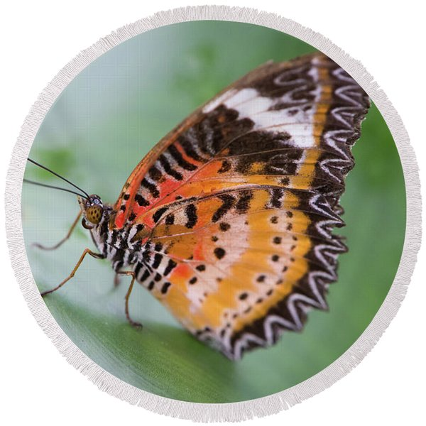Butterfly On The Edge Of Leaf Round Beach Towel
