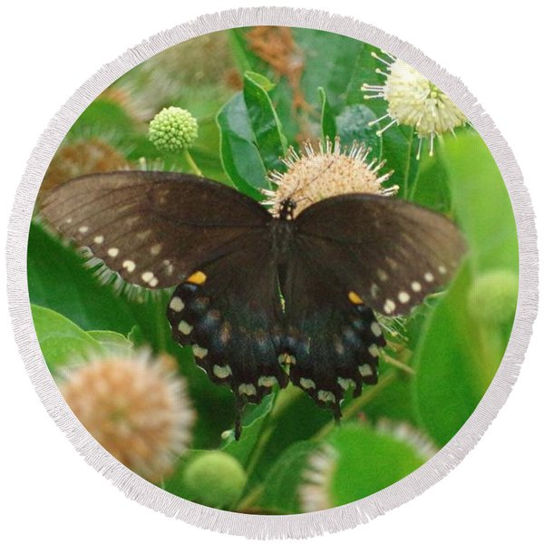 Butterfly Spicebush  Round Beach Towel