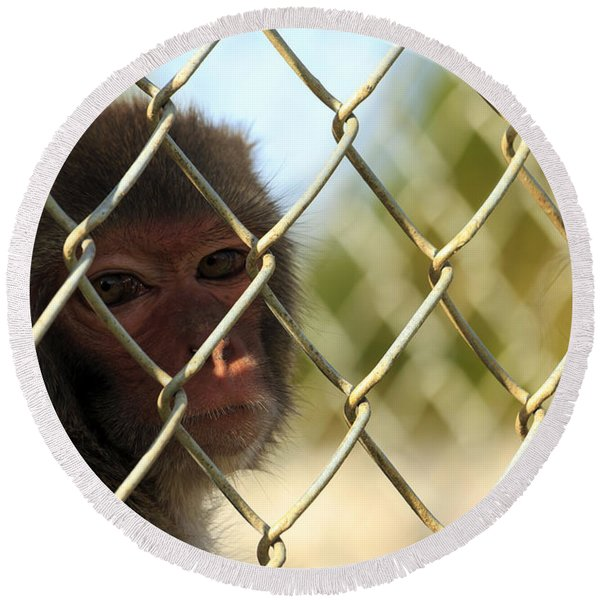 Caged Monkey Round Beach Towel