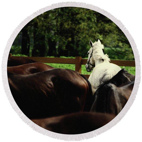 Calm Horses Round Beach Towel