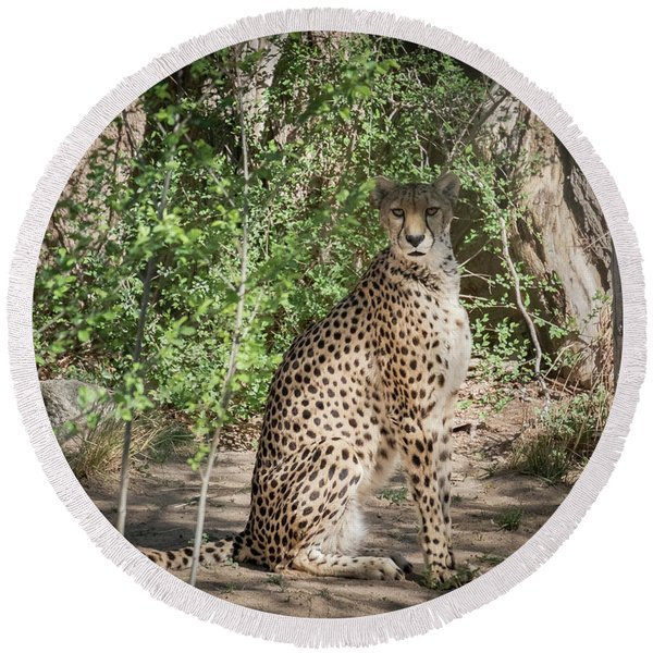 Round Beach Towel featuring the photograph Cheetah by Mary Lee Dereske