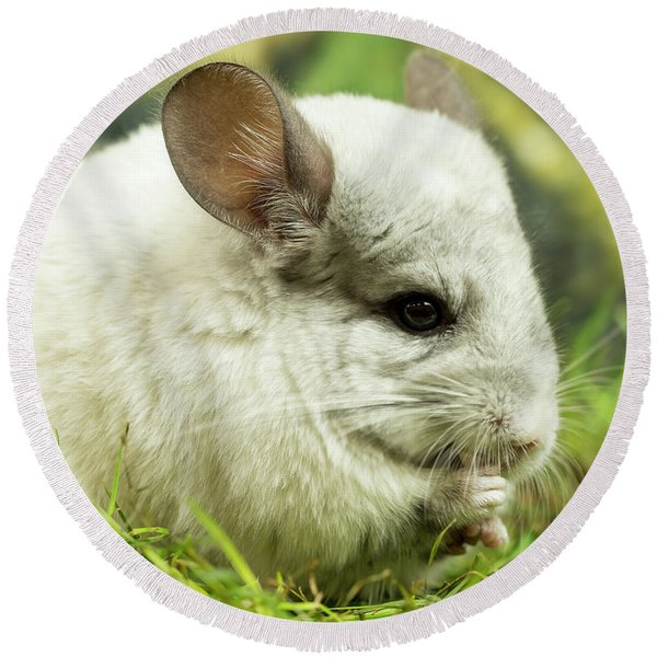 Chinchilla Round Beach Towel