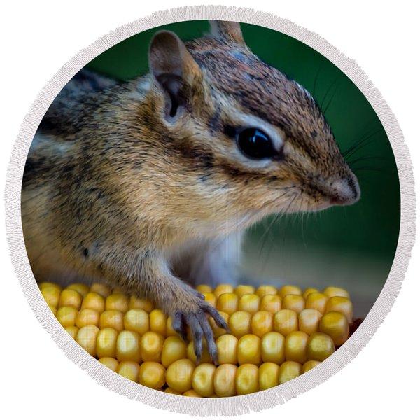 Chipmunk Goes Wild For Corn Round Beach Towel
