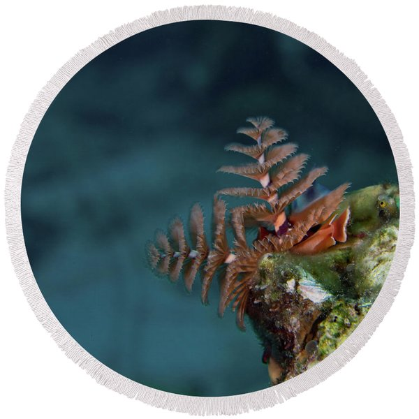 Christmas Tree Worm Lookout Round Beach Towel