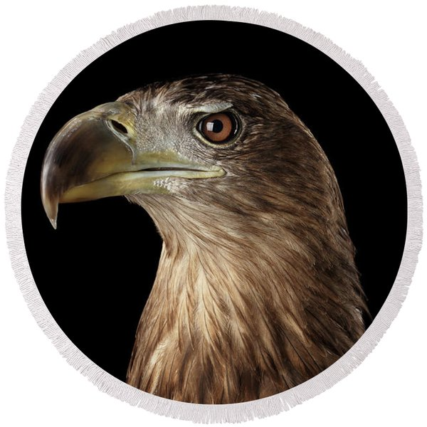 Close-up White-tailed Eagle, Birds Of Prey Isolated On Black Background Round Beach Towel
