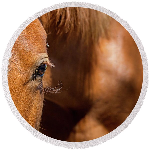 Closeup Horse Eye With Copy Space Round Beach Towel
