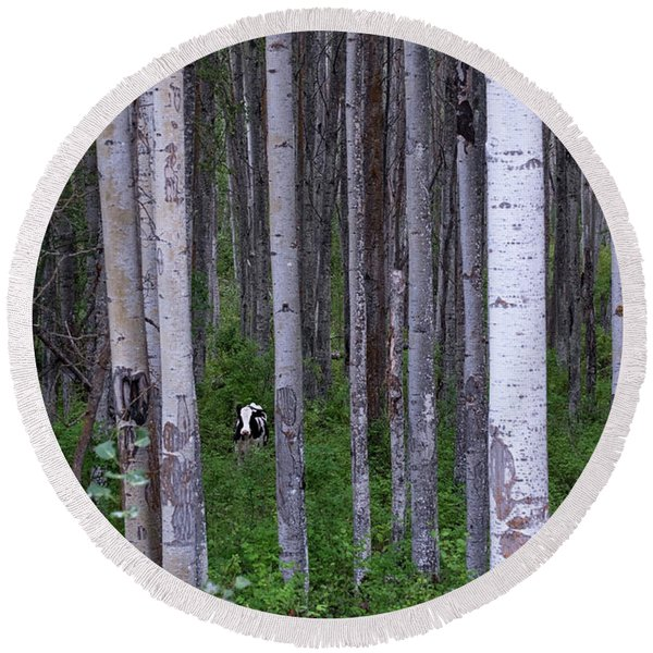 Round Beach Towel featuring the photograph Cow In Aspen Trees by Mary Lee Dereske