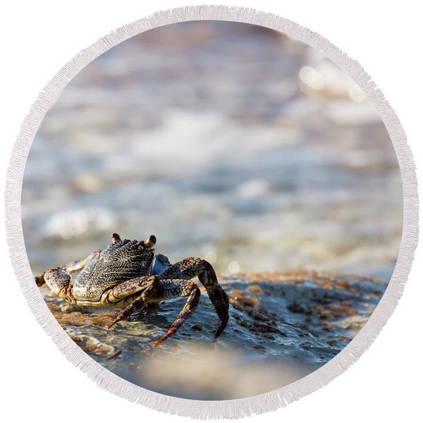 Crab Looking For Food Round Beach Towel
