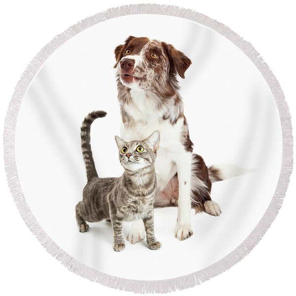 Curious Cat And Dog Looking Up Round Beach Towel