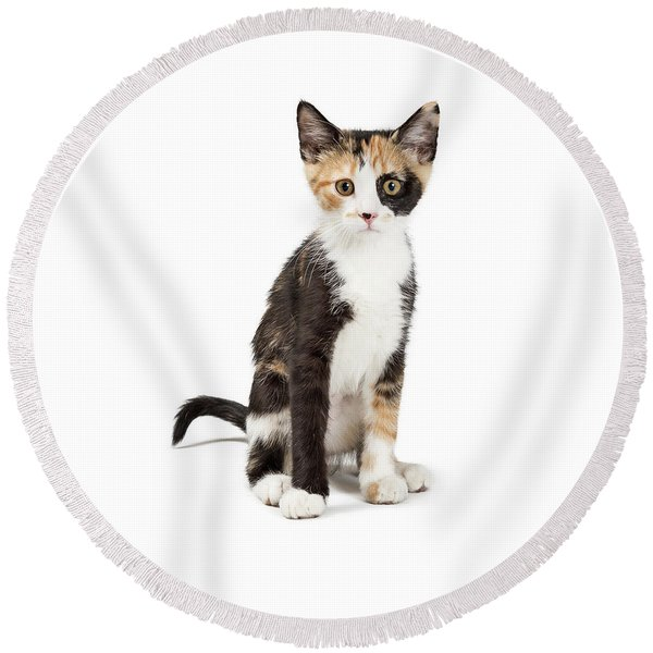 Cute Calico Kitten Sitting Looking Forward Isolated Round Beach Towel