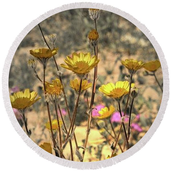 Round Beach Towel featuring the photograph Desert Spot Daisy by Michael Hope