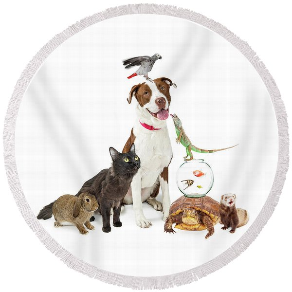 Domestic Pets Group Together With Copy Space Round Beach Towel