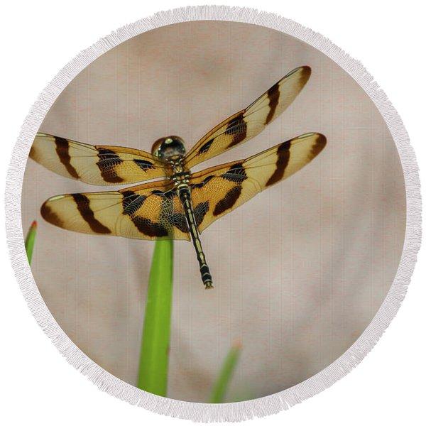 Dragonfly On Grass Round Beach Towel