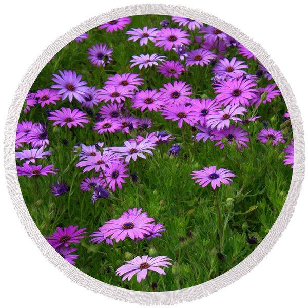 Dreaming Of Purple Daisies  Round Beach Towel
