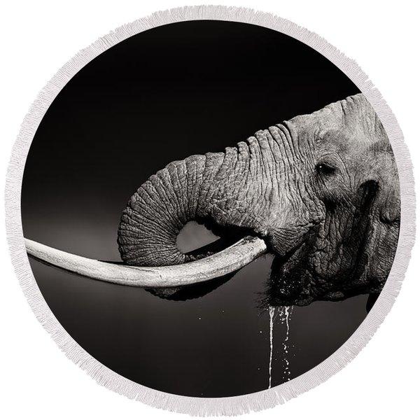 Elephant Bull Drinking Water - Duetone Round Beach Towel