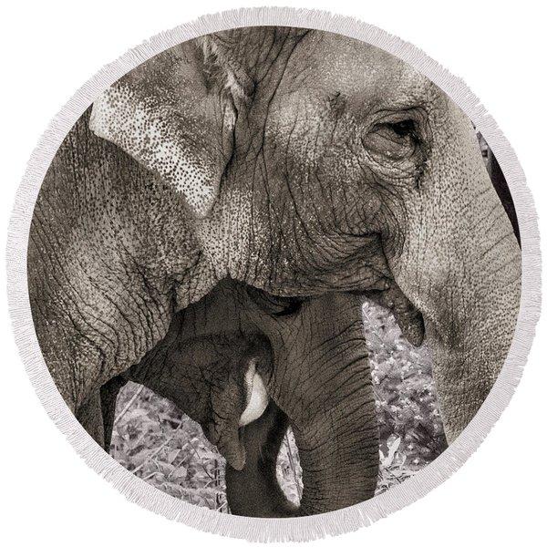 Elephant Family Portrait Round Beach Towel